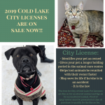 2019 Cold Lake City Licenses