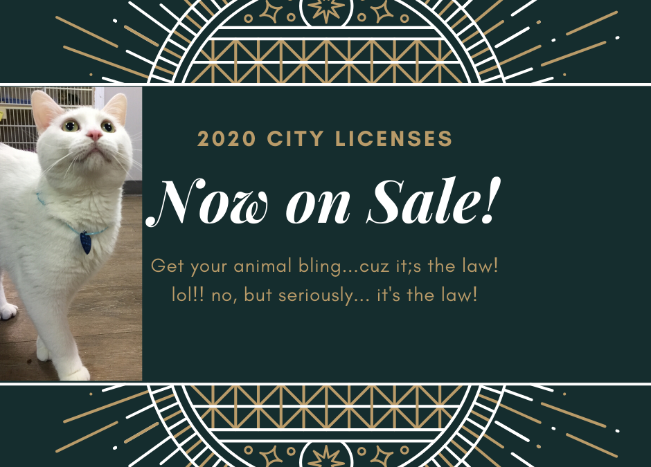 2020 Cold Lake City Licenses