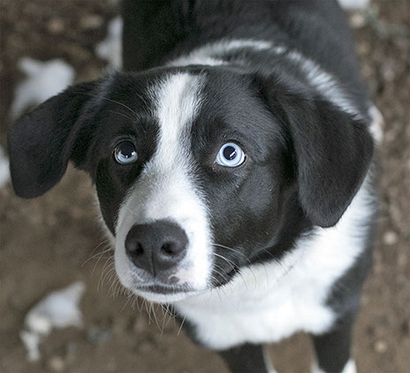 Lakeland Humane Society - Adoptable Dogs