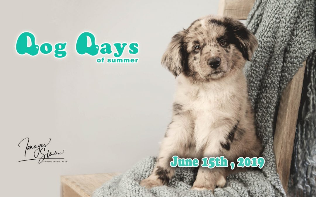 Dogs Days of Summer 2019