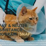SNAP!  (Spay & Neuter Assistance Program)